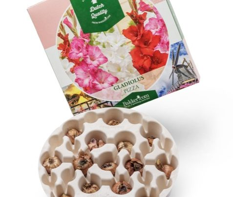 flower bulbs pizza plant tray bio-based compostable no plastic PaperFoam sustainable packaging